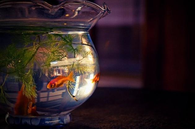 800px-Fish_bowl2