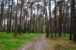 forest near Vilnius