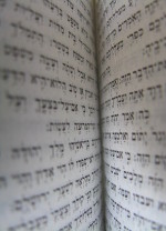 torah rotated
